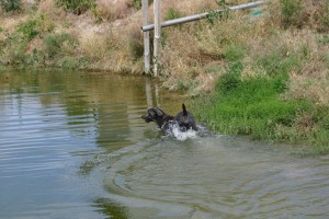 Dusty at the Pond