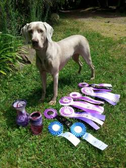 May 31, 2015 –UKC Best-In-Show and High-In-Trial Champion Sunstar Willow of OwyheeStar, CGC, UROI, TDI