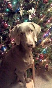 Bandit Christmas 2011(1)