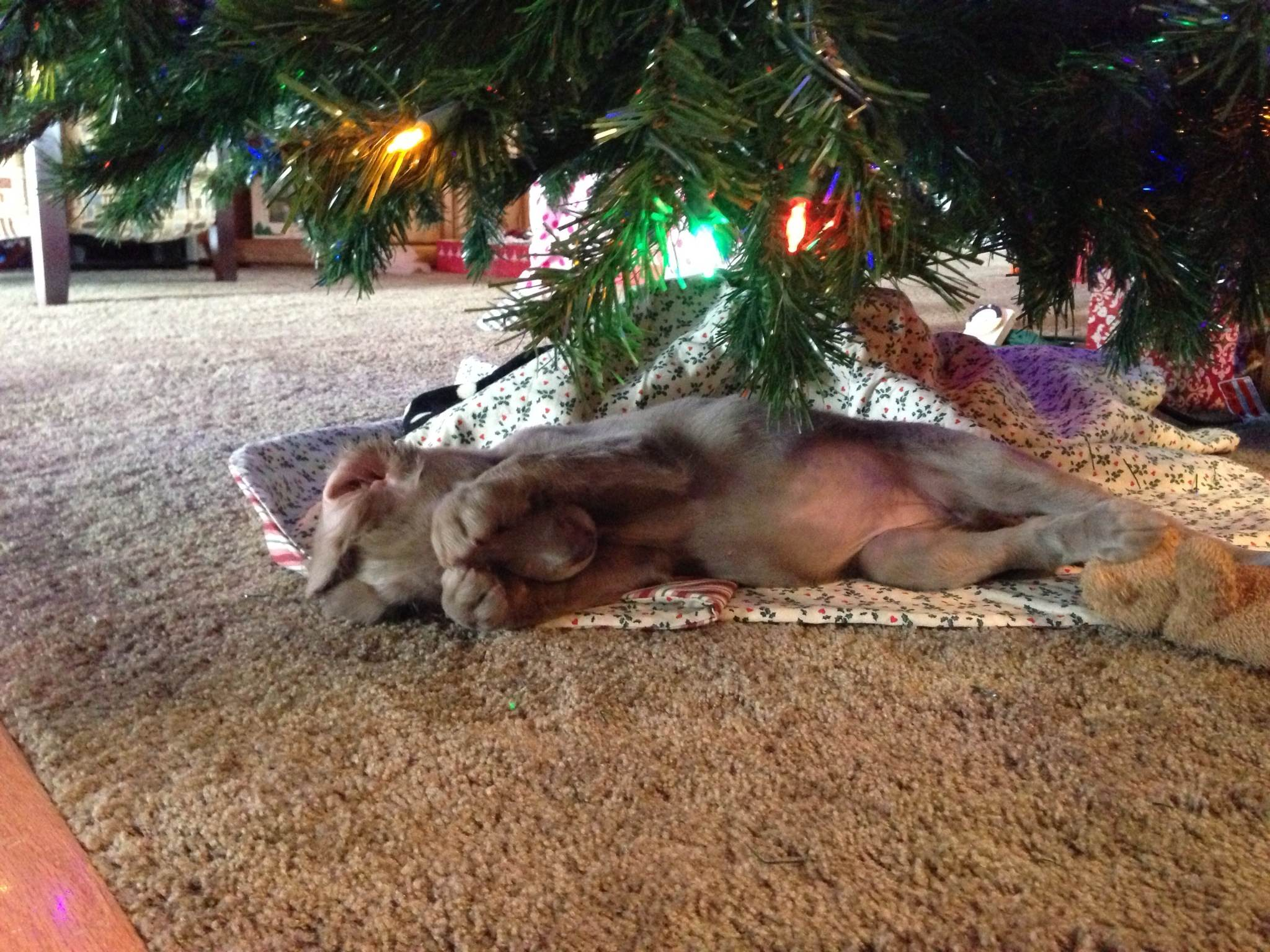 Charlie being cute under the tree