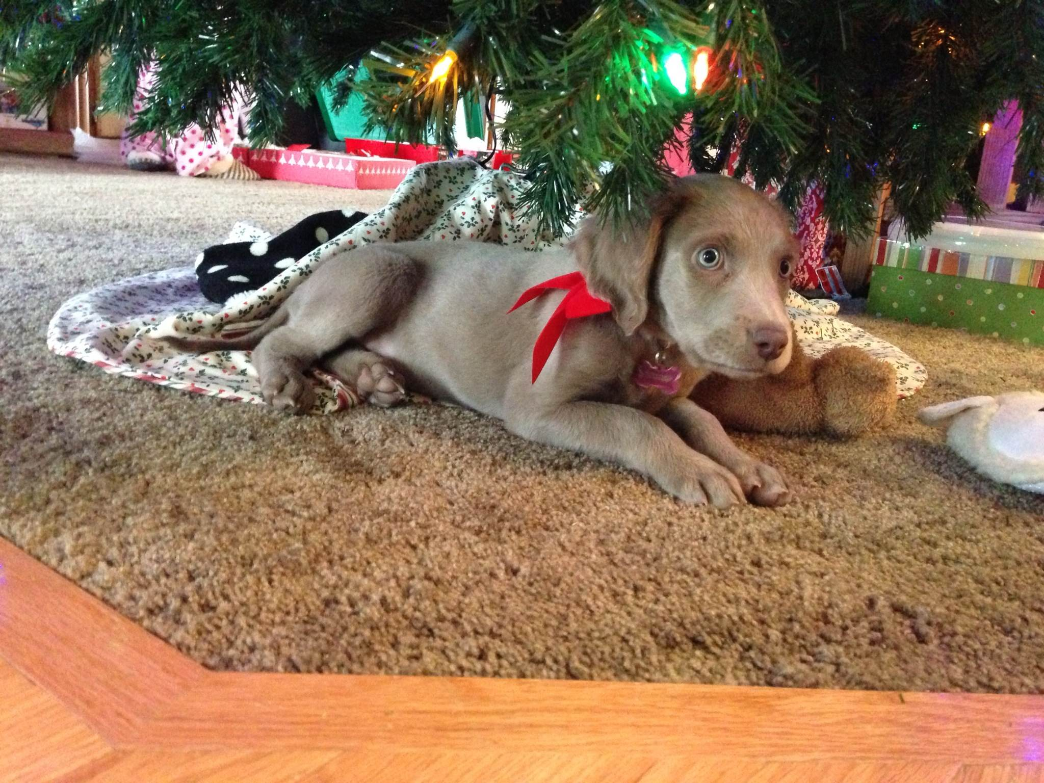 Charlie under the tree