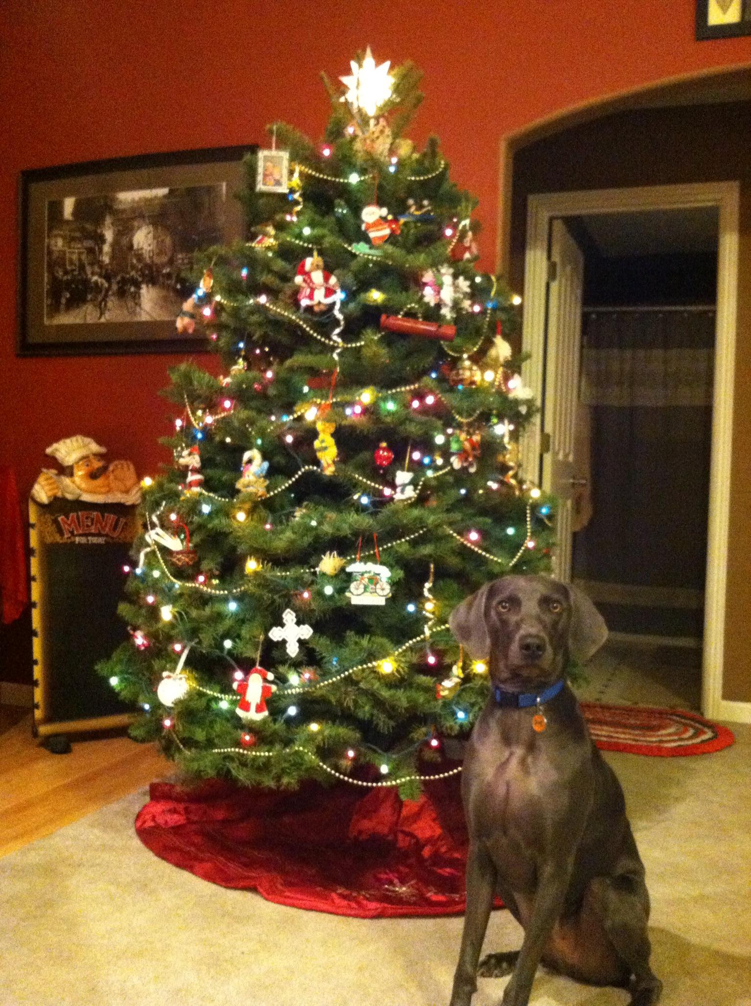 Tody Christmas 2012