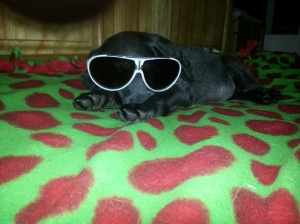 Moxie -- keeping her cool!