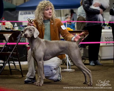 Jan Willow --Best In Show 2013