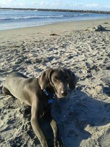 Sunny at the Beach Nov 2012A