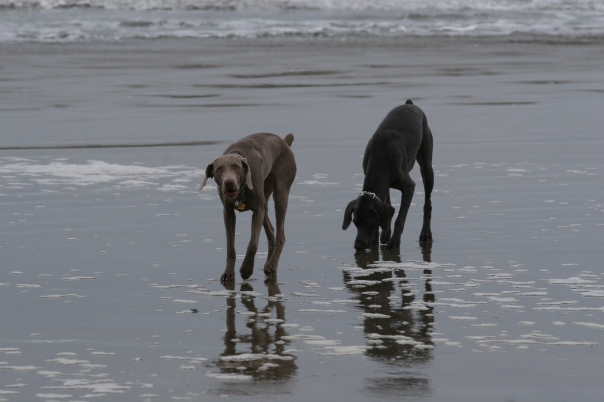 Ruca and Bennett enjoy the beach