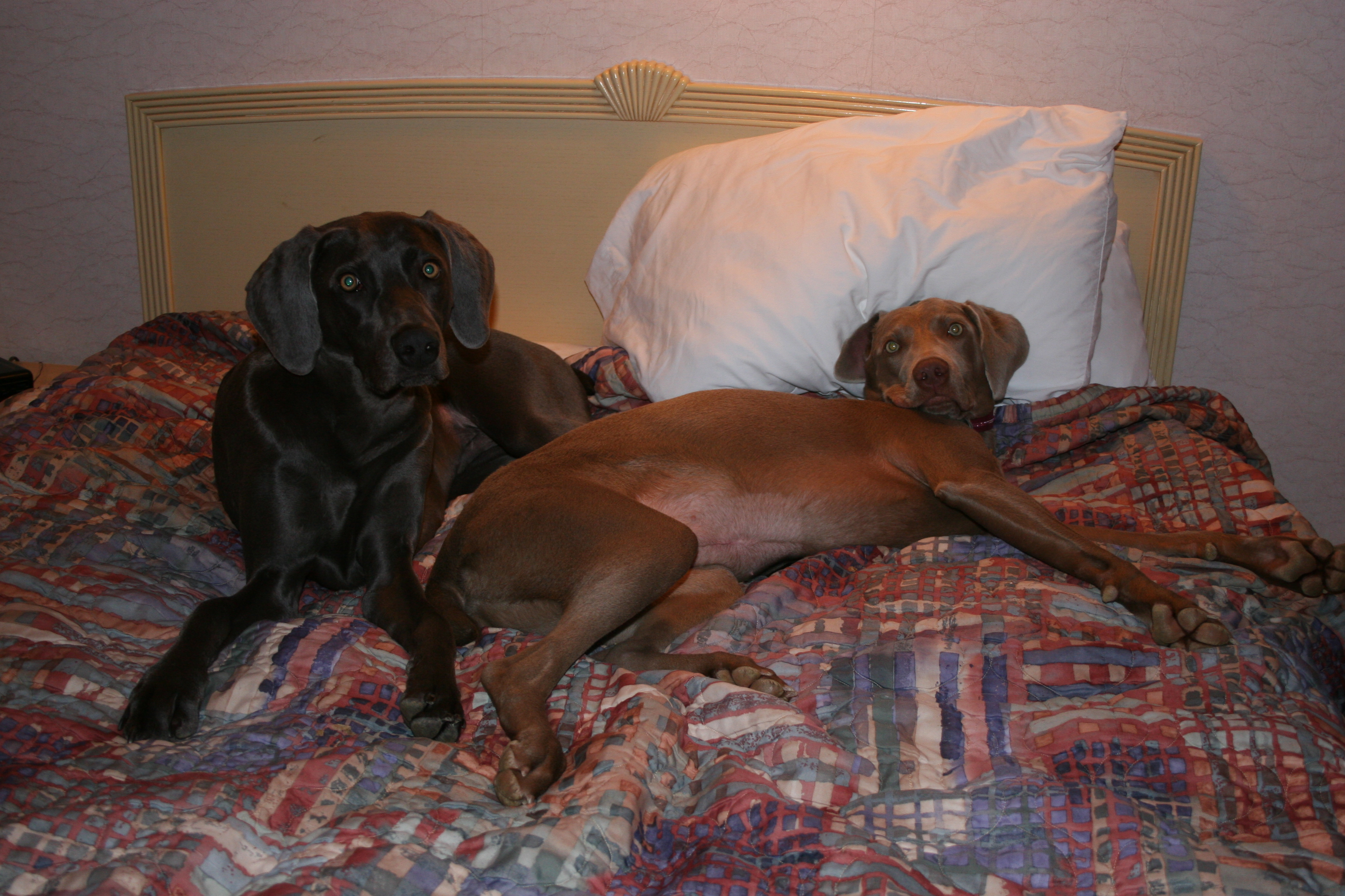 Bennett and Ruca enjoy the comforts