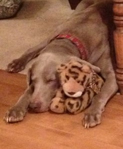 Kaos with toy