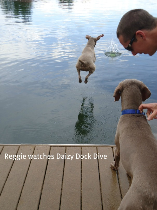 B Reggie Watches Daizy Dock Dive