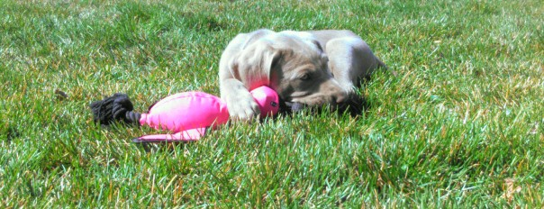 Charlie likes her pink bird!