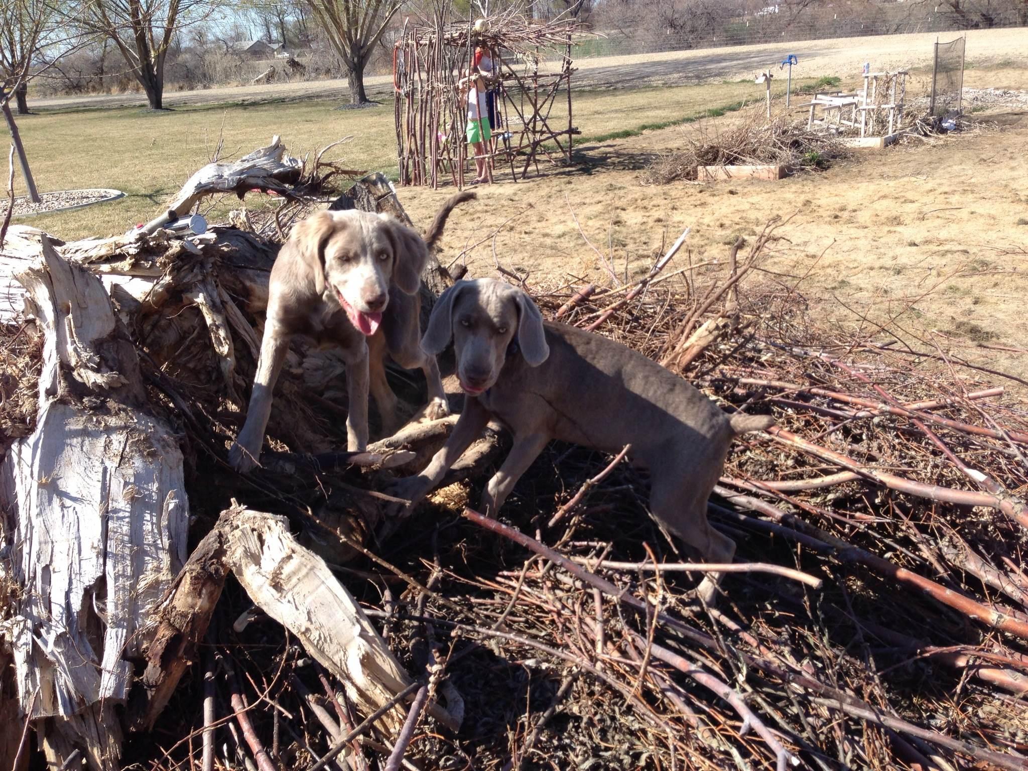 We love this slash pile!