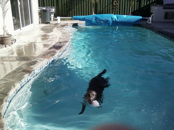 Stormy in the pool