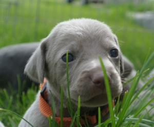 FB_Puppy in grass