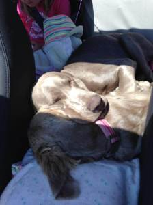 Napping together on the way home from camping!
