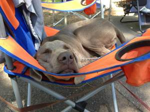Mace having a nap in a camp chair