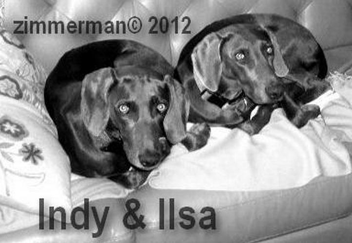 B Indi and Ilsa 2 Blue Weims.cr
