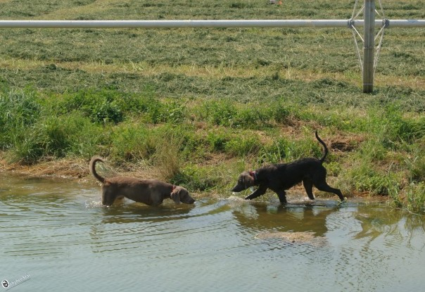 Bernie and Bonnie Blue think the water is good!