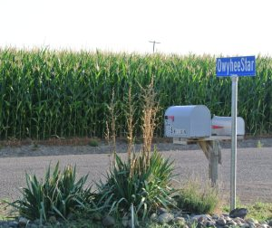 Corn, Sign, and Spent Yucca Blossoms_4135