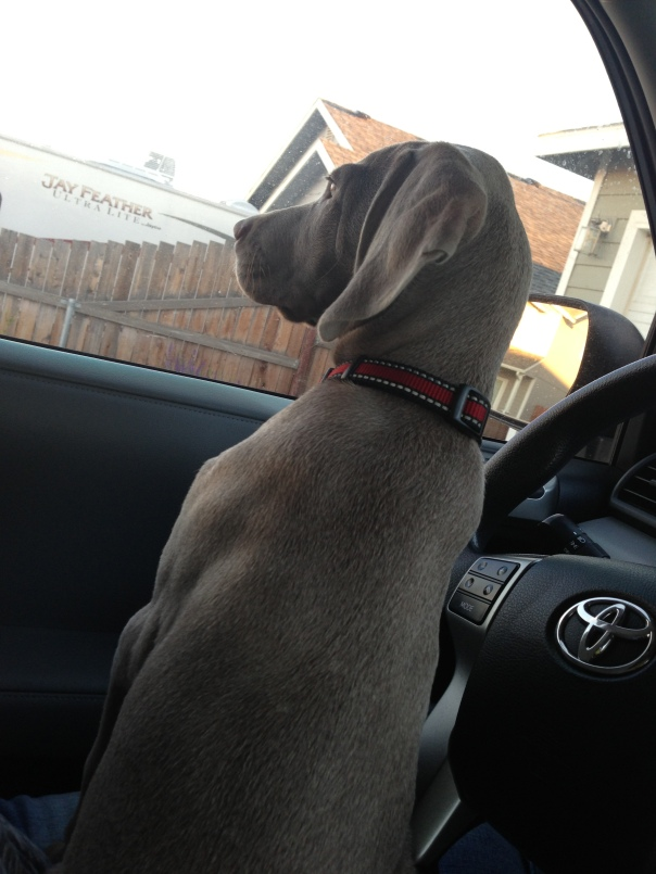 Thunder prefers to be the one driving...