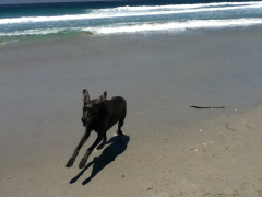 Arliss at the beach