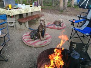 First camping trip with 3 Weims.. I went through a-lot of poop bags!