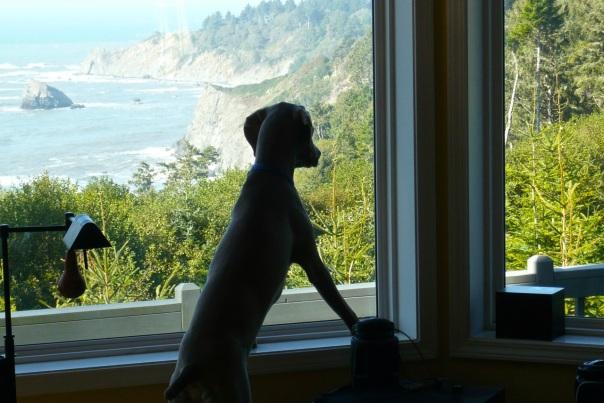 Mr. Peabody's Last Look