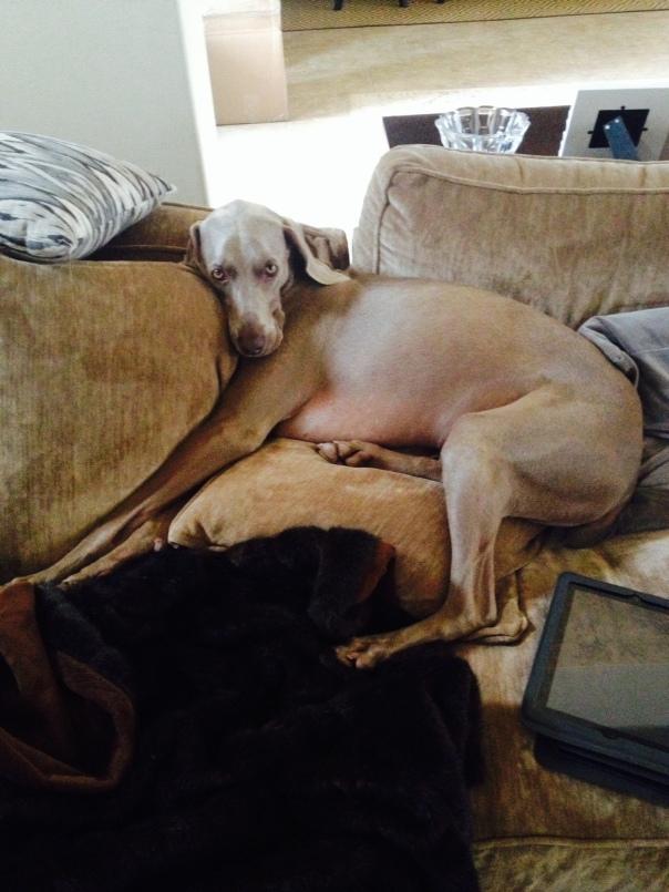 Milo enjoys his comfort