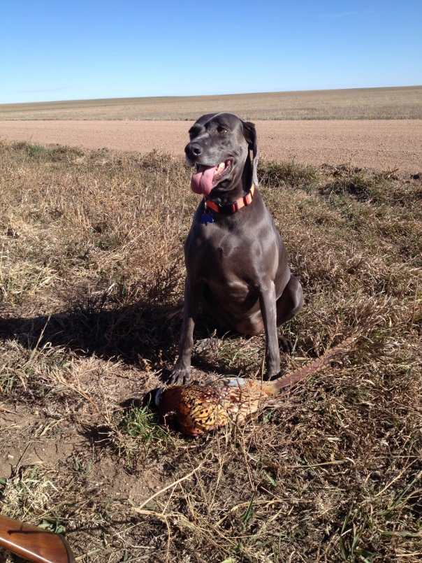 I got Dad's Pheasant