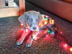 Charlie's First Christmas
