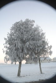Thick Hoar Frost