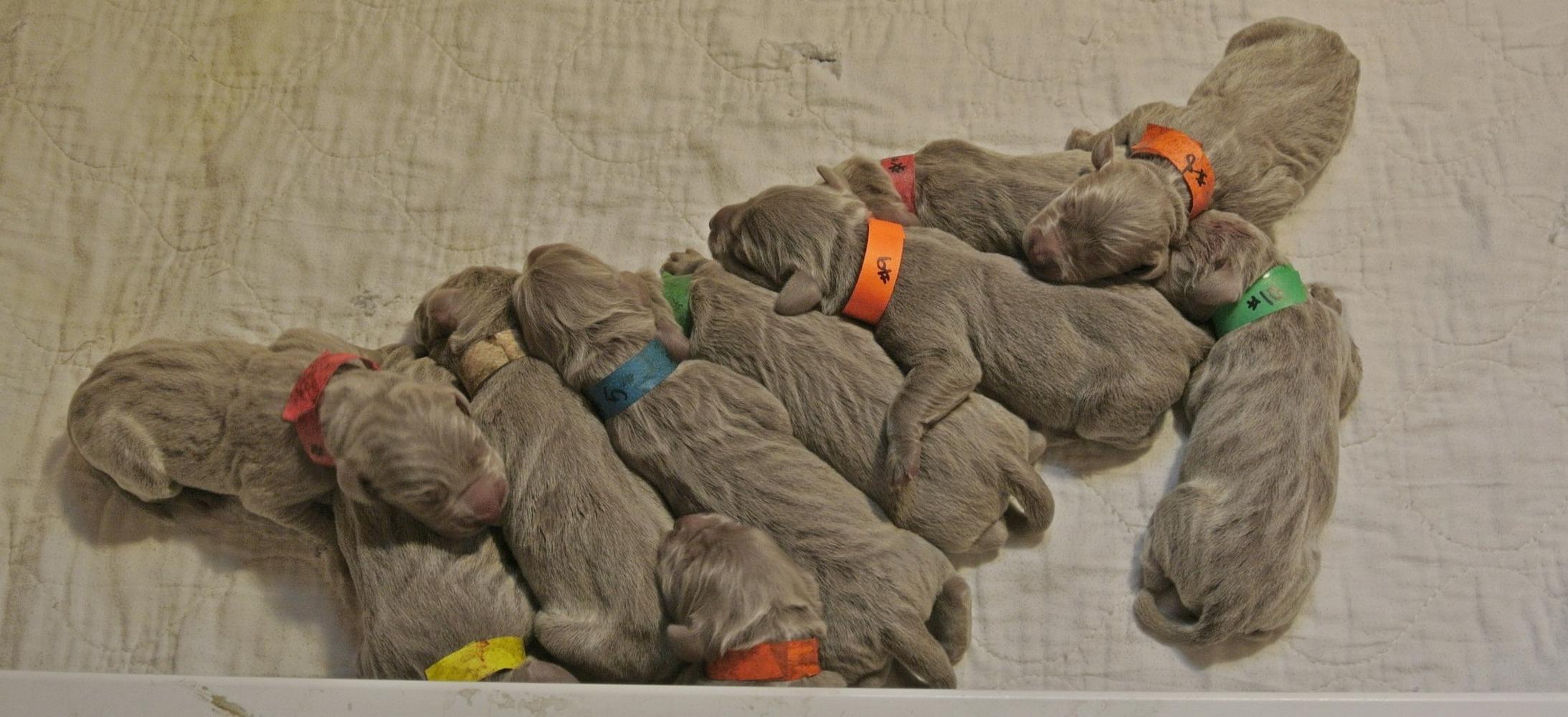 Greta's Newborns