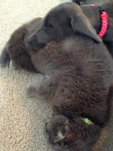 I love My Kitty Pillow