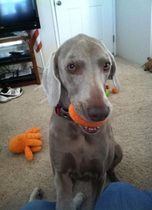 """""""I gots my toy, and I am truly innocent."""" ~Lucy"""