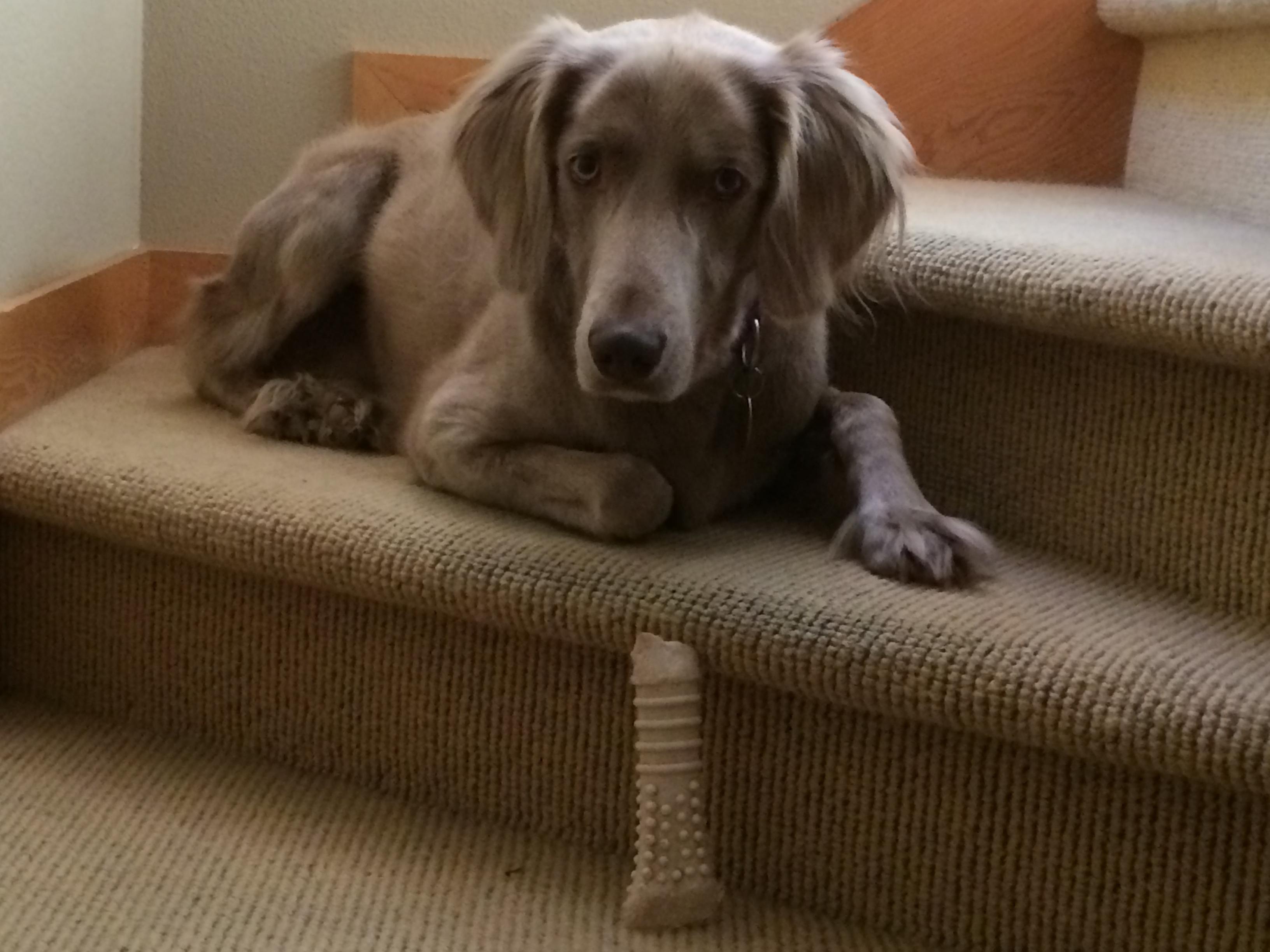bone guarding Siena