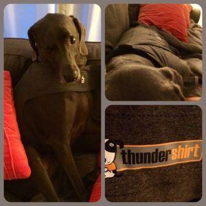 Rupert requires the Thundershirt