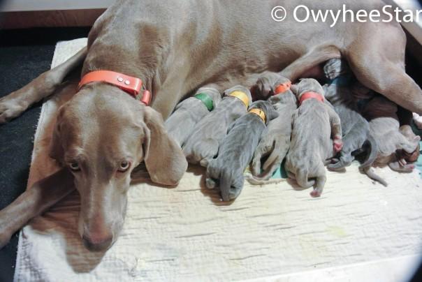 Greta and her babies