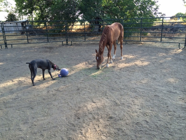 BLM Rescue horse