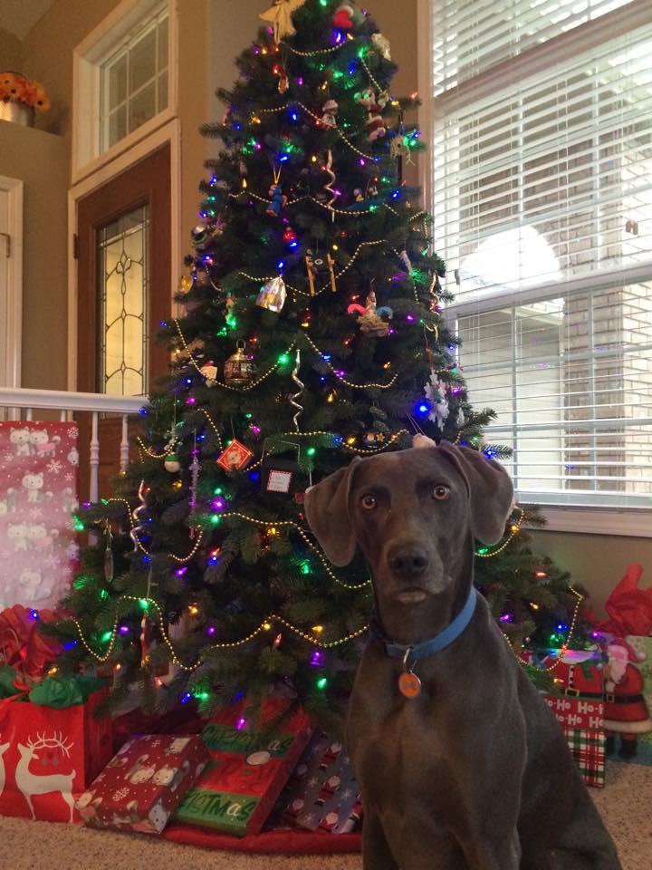 Toby Tree-side