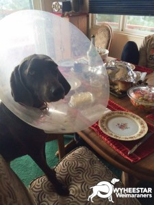 Ellie's Thanksgiving Look