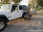 Cliff_Jeep_Dog Trailer-3