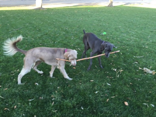 We Share the Stick