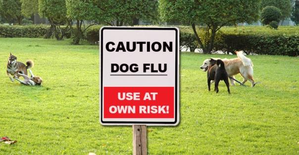 dog-flu