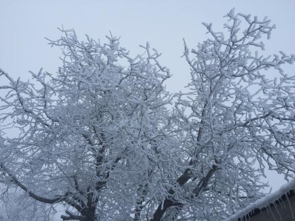 Hoar Frost_1373