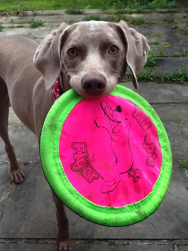 Jorga Frisbee1