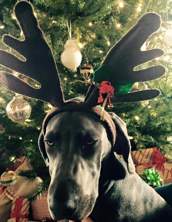 Kerr's Rebel Reindeer