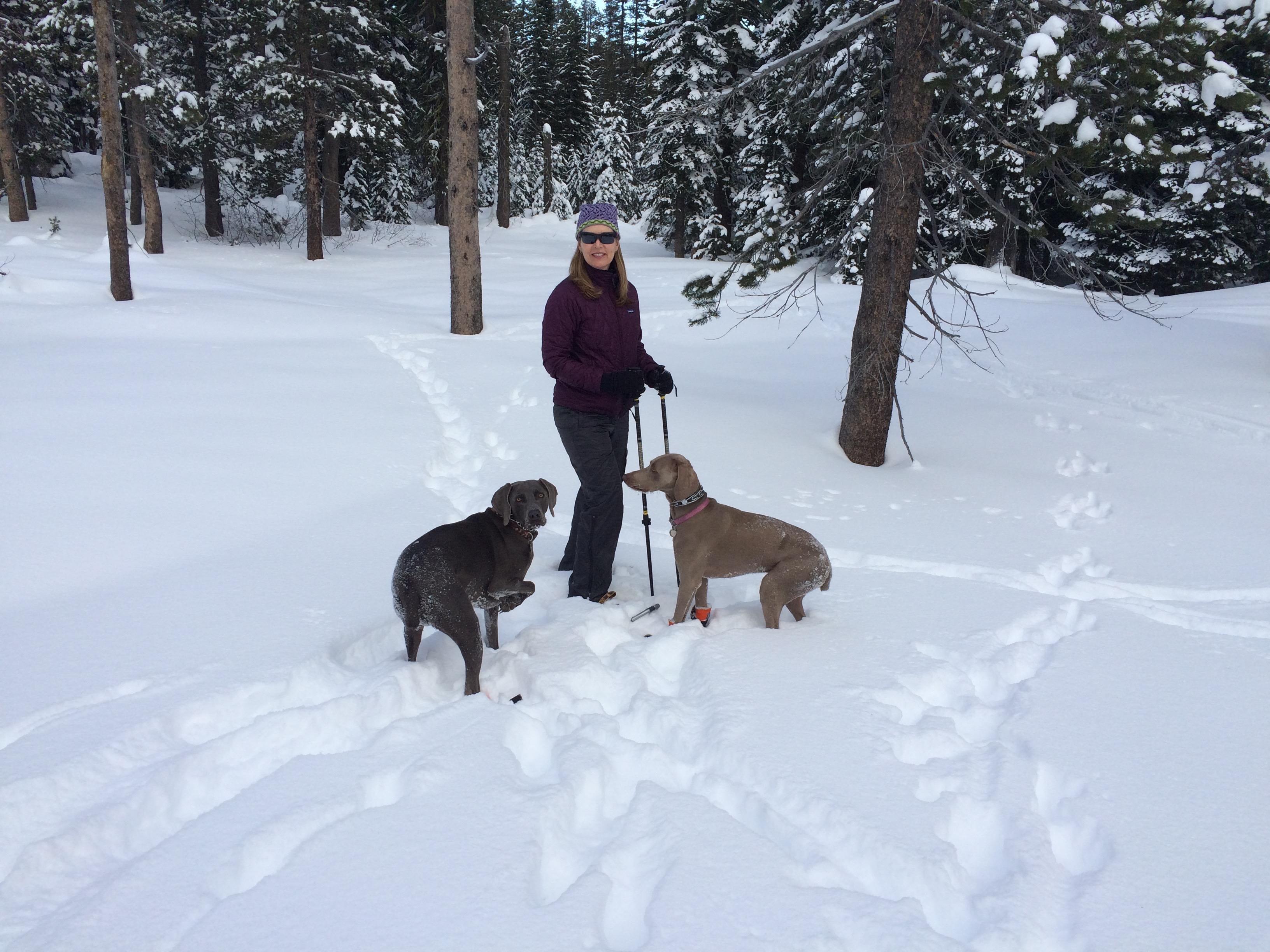 Snow Loving Weims