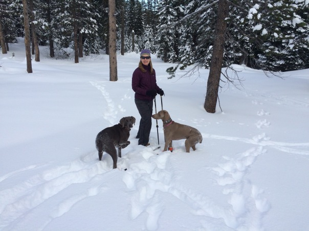 Snow Loving Weims