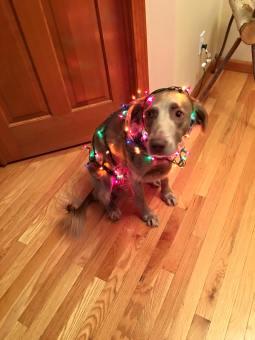Spight's Charlie Mae Christmas Tree3904_o