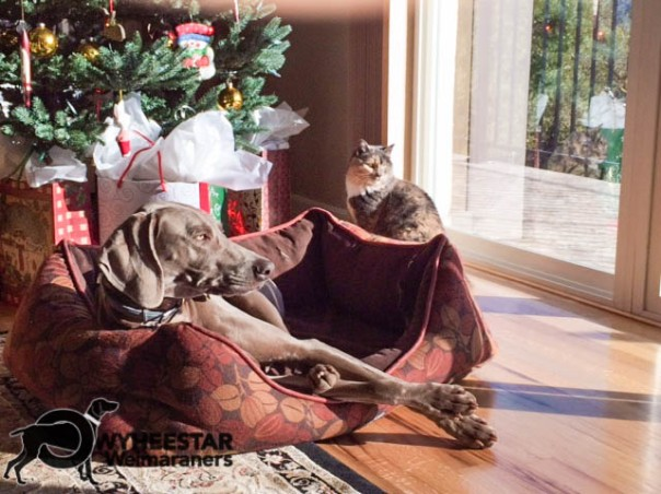 Clay's Bliss at Christmas with Kitty.jpg