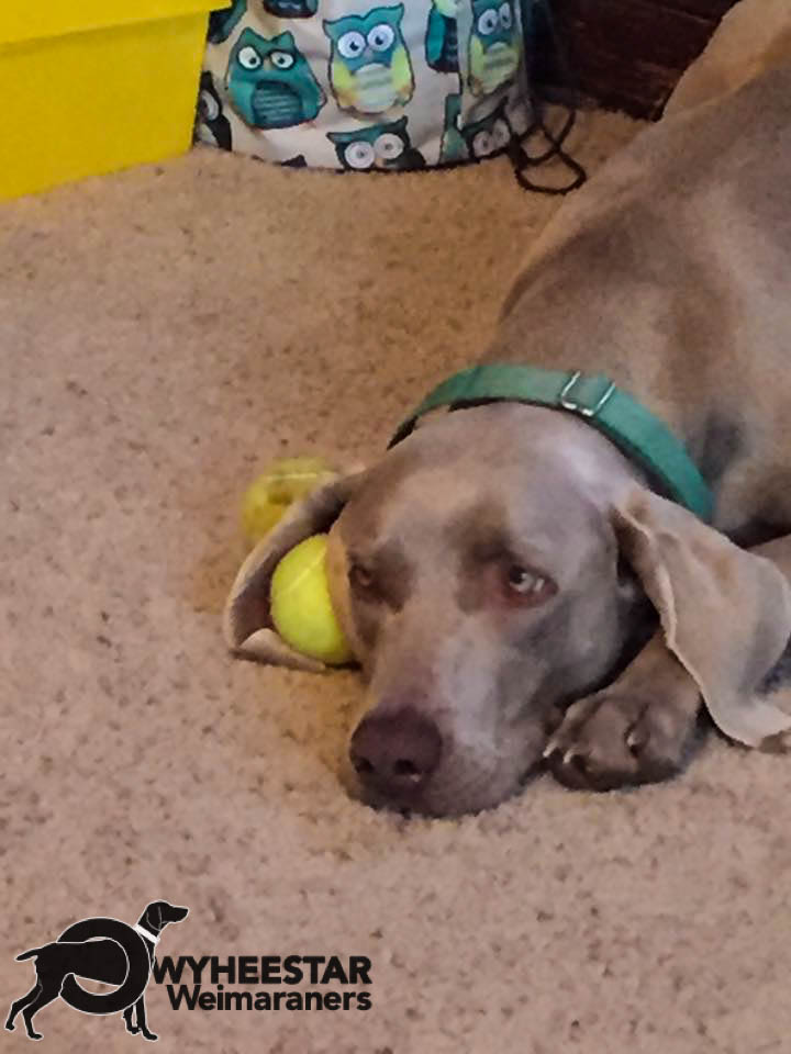 Ruger Ear-Ball